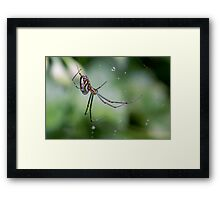 Spiders have jewels on their legs Framed Print