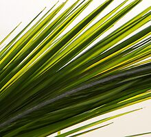 Palm Abstract by Debbie Oppermann