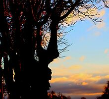 A Beautiful sunset across  Trees by Arvind Singh