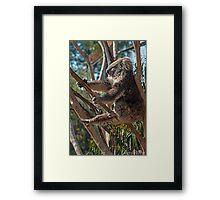 Koala Yoga Framed Print