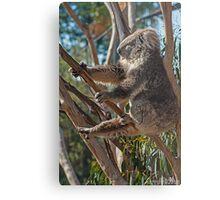 Koala Yoga Metal Print