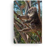 Koala Yoga Canvas Print