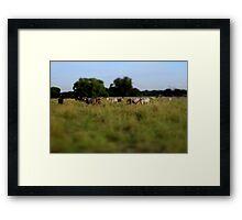 'Miniature' Cows Framed Print