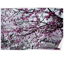 Frozen Red Bud Tree Poster