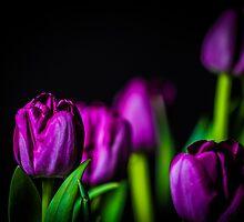 Bundle of Tulips Purple by Thliii