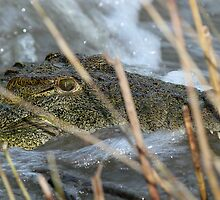 Danger lurking in the reeds! by jozi1