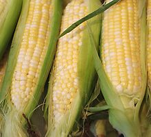 Ears of Corn by Tom  Reynen