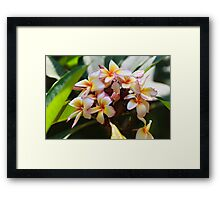 Colours in the Green Framed Print