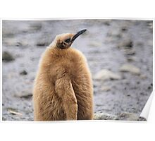 King Penguin Chick in South Georgia Poster