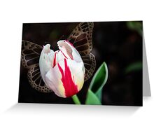 A beautiful red and white tulip Greeting Card
