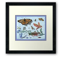 Illustration Of Insects Framed Print