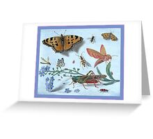 Illustration Of Insects Greeting Card