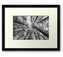 Japanese larch - black & white Framed Print