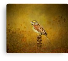 The Dickcissel Canvas Print