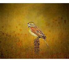 The Dickcissel Photographic Print