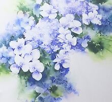 Hydrangea - 2 by Bev  Wells
