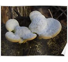The Mickey Mouse 'Shroom Poster
