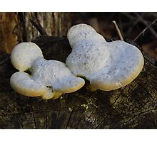 The Mickey Mouse 'Shroom Photographic Print