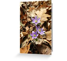 Purple Hepatica from the Leaf Litter Greeting Card