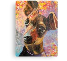 Mischief Maker  Happy Miniature Pinscher  Metal Print