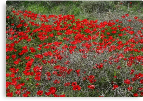 Beautiful Red Wild Anemone Flowers In A Spring Field  by taiche