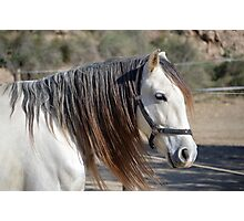 Andalusian Horse Photographic Print