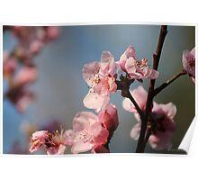 Springtime Peach Blossoms IV Poster