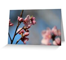 Springtime Peach Blossoms V Greeting Card