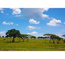 Masai Mara 3 - Kenya Photographic Print