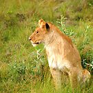 Lioness by Charuhas  Images