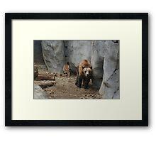 Bear Troubles Framed Print