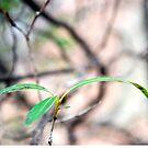 Three Leaves by Kendra Kantor