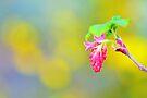 Spring Garden by pseth