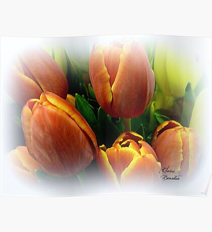 Tulips in a Citrus Bouquet Poster