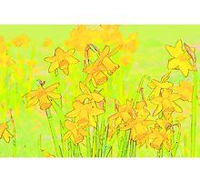 Daffodil Garden Photographic Print