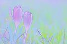 Crocus Garden by pseth