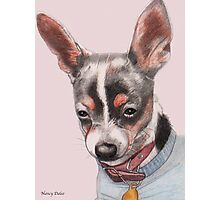 Chihuahua Portrait Photographic Print