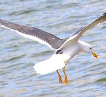 The landing on water by Arvind Singh