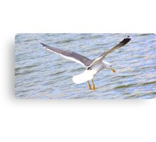 The landing on water Canvas Print