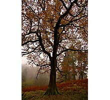 Tree On Route To Rydal Water Photographic Print