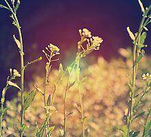 Summer lovin by Kchaffins0006