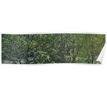 Panoramic Triple View - Green Trees Poster