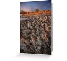 Sunset March Greeting Card