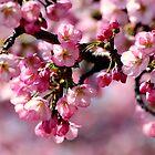 Spring has sprung by arlingtonpup