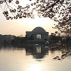 Jefferson Memorial & Cherry Blossoms by Kelly Morris
