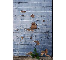 Up Against the Wall Photographic Print