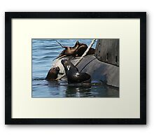 Sea Lions fun by the old submarine!!! Framed Print
