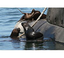 Sea Lions fun by the old submarine!!! Photographic Print