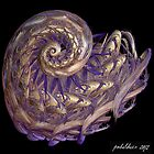 """Purple Spiral"" by Patrice Baldwin"