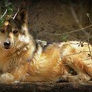 """""""Lobo"""" by Kimberly Chadwick"""